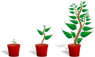 franquias online expectativas de crescimento